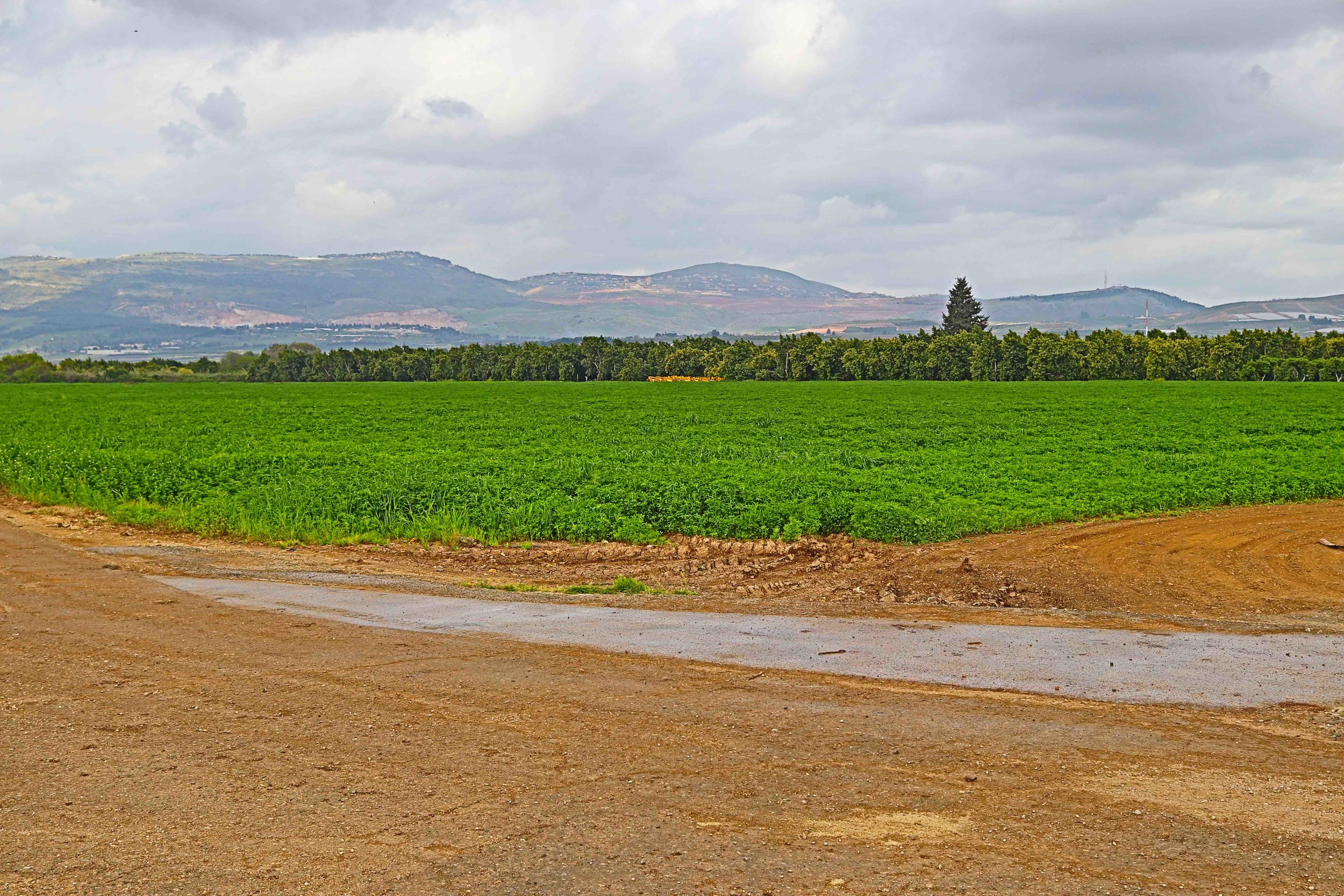 Kibbutz Dafna farmland.