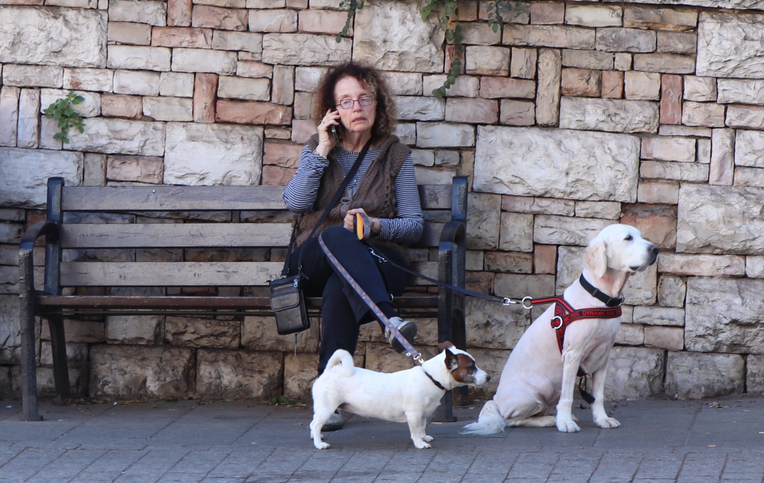lady with dogs lower quality.jpg
