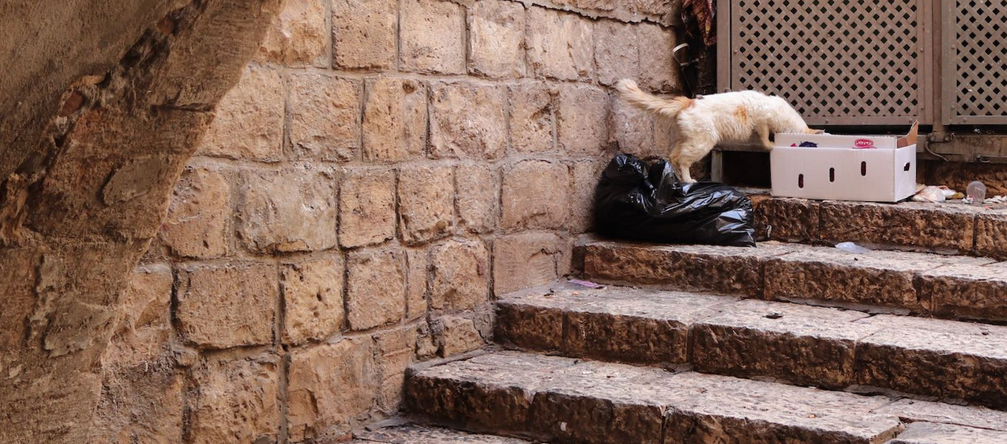Stray cats everywhere. This one rummaging neck deep in garbage.