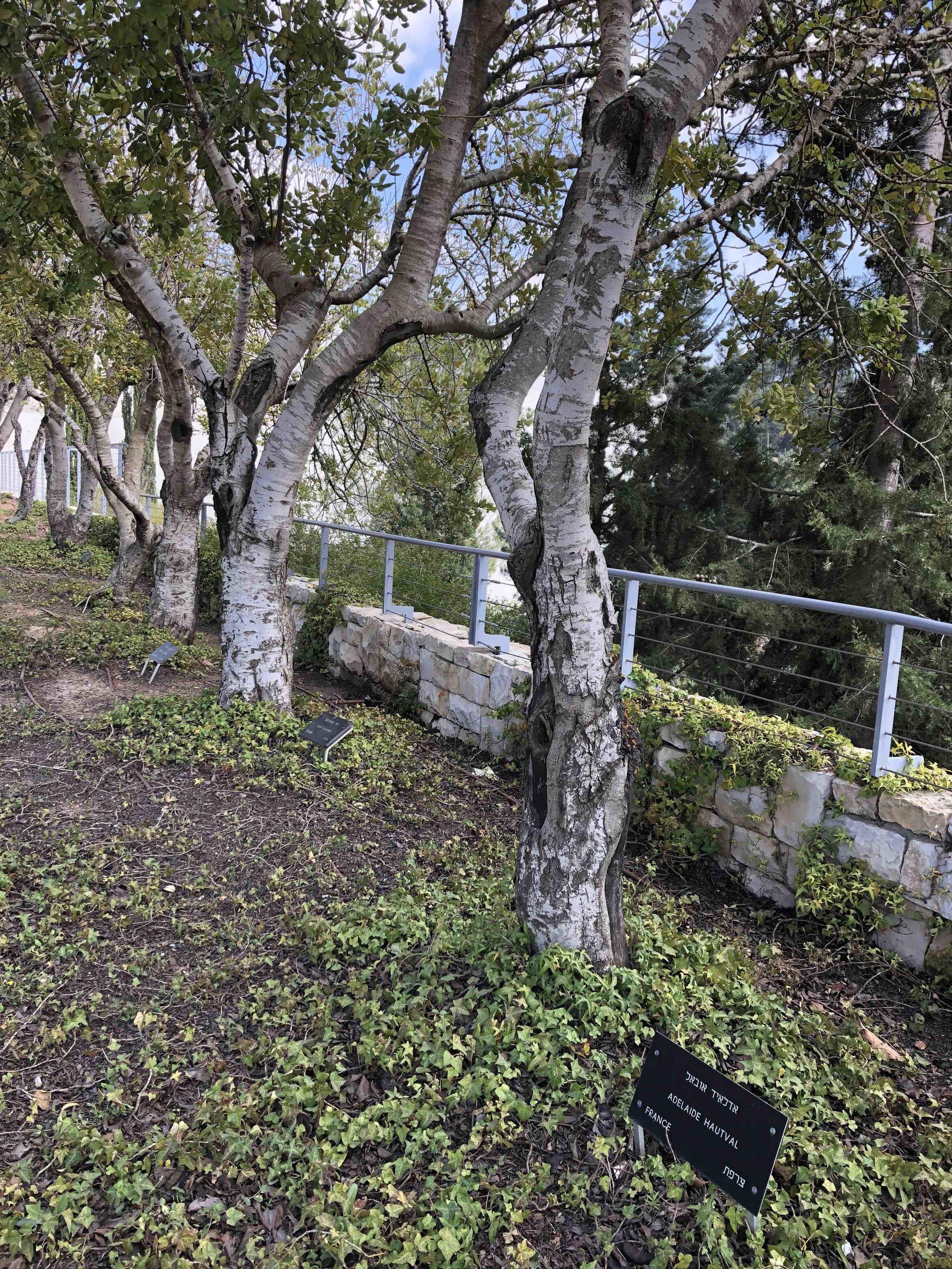 light trees medium smaller.jpg