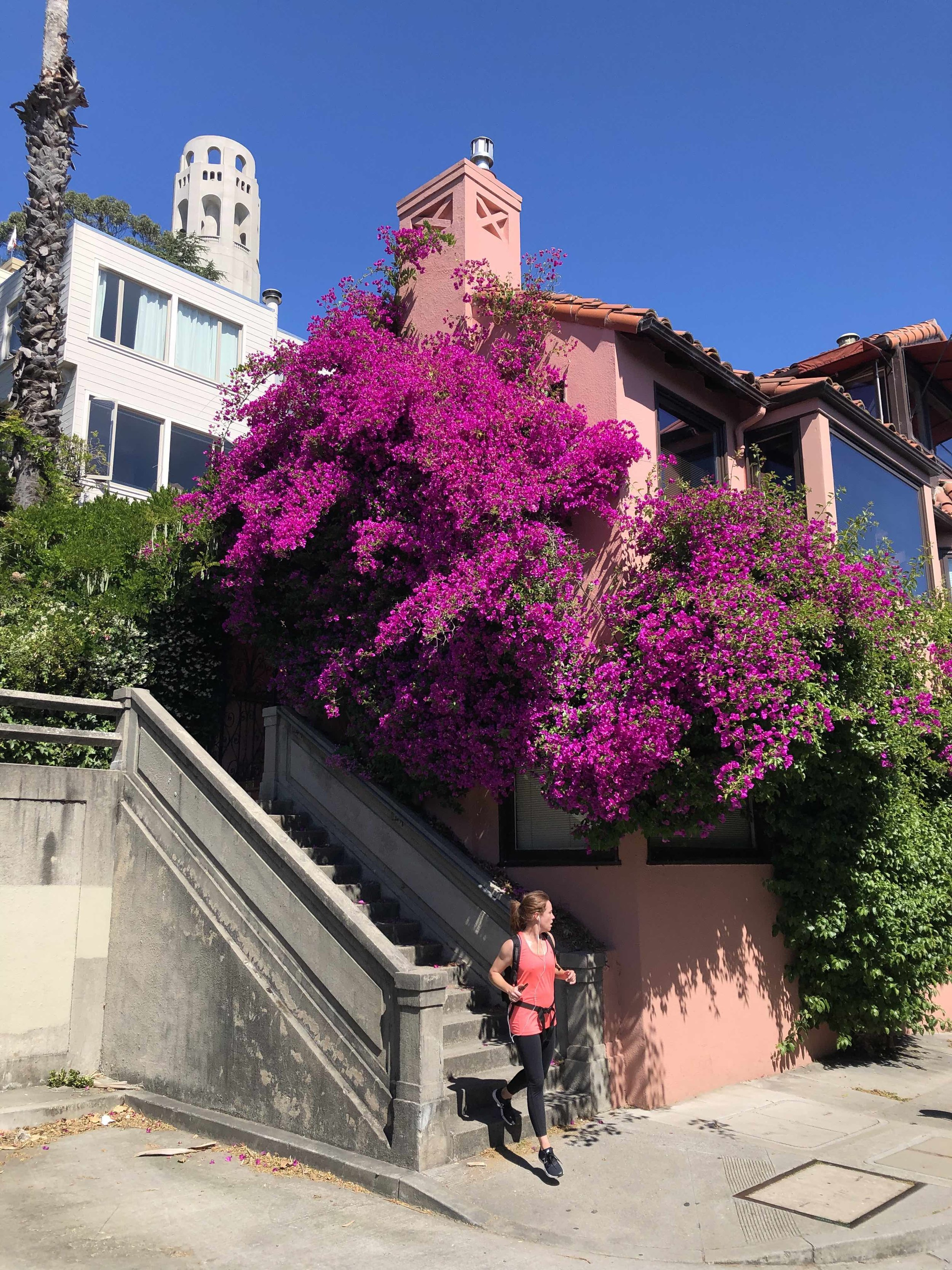 San Francisco's beautiful bougainvillea.