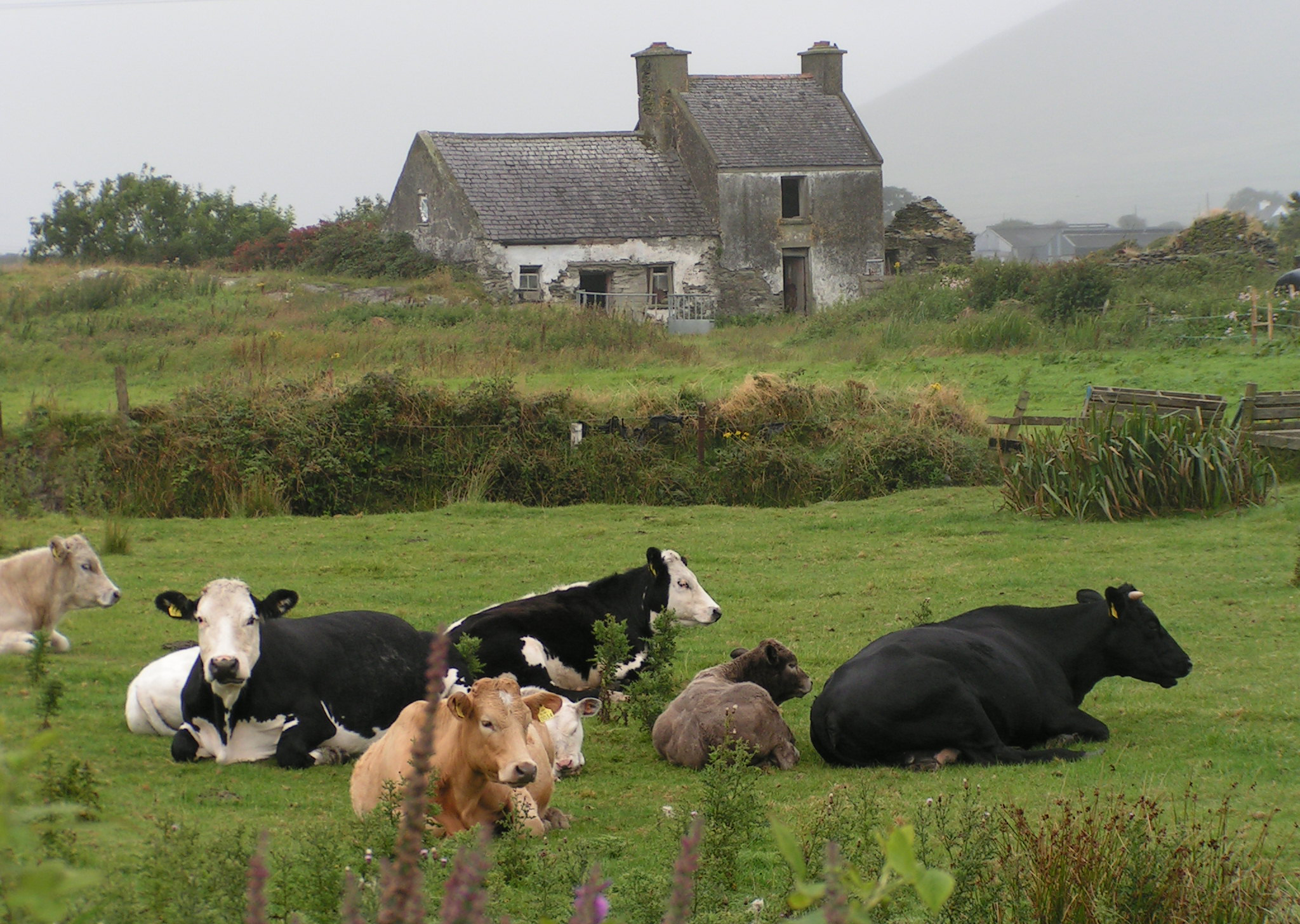 Background-Irish house grey .JPG