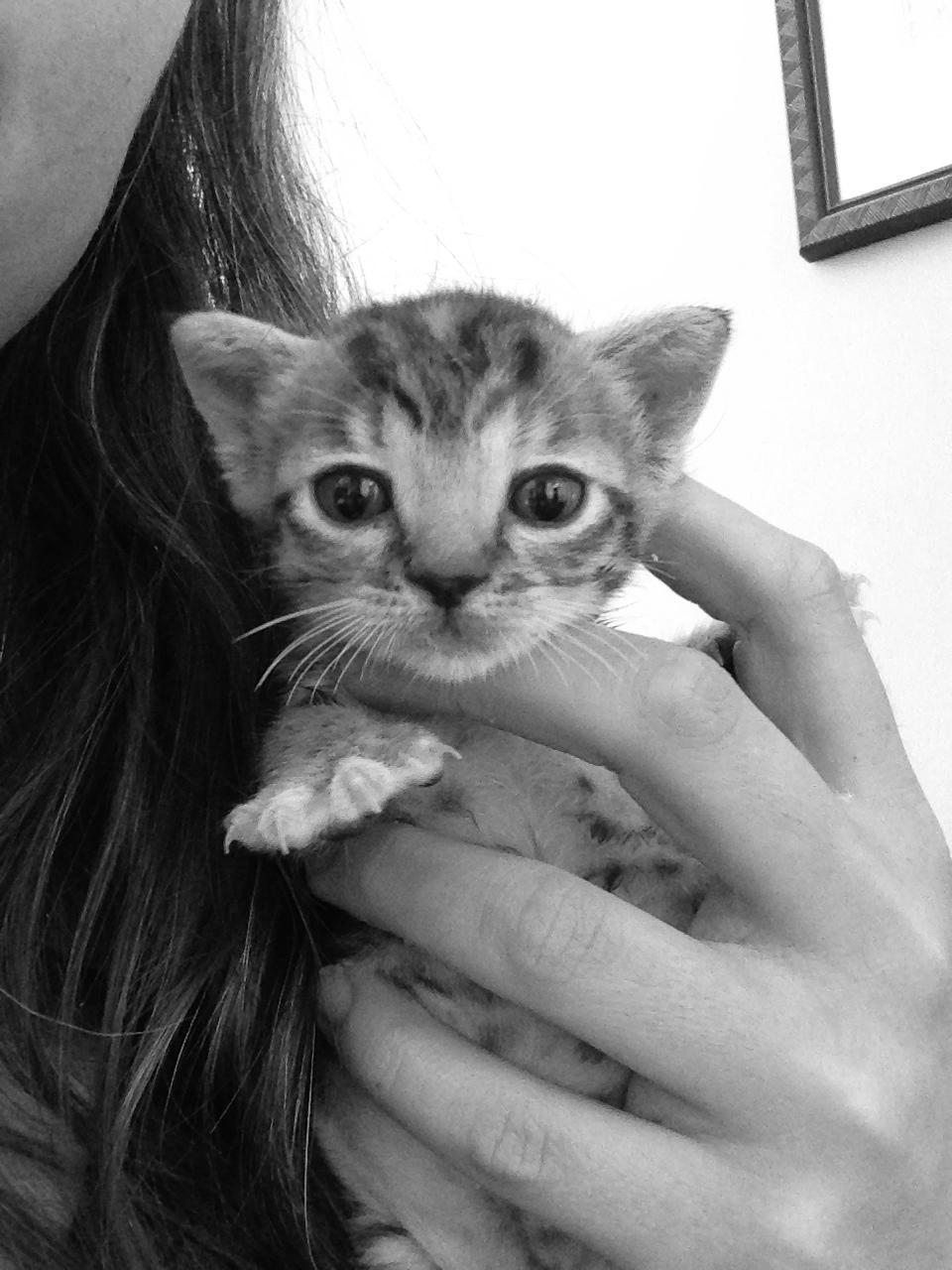 Blue Eyes Kitten .jpg