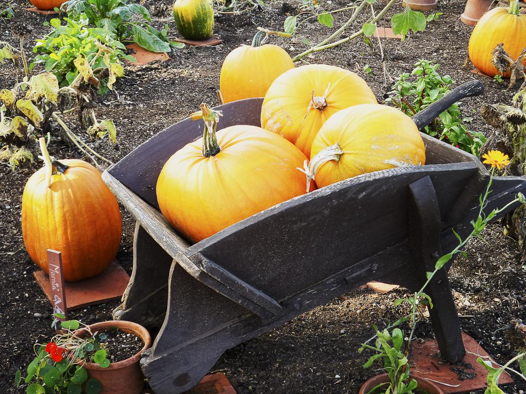 autumn-151.jpg