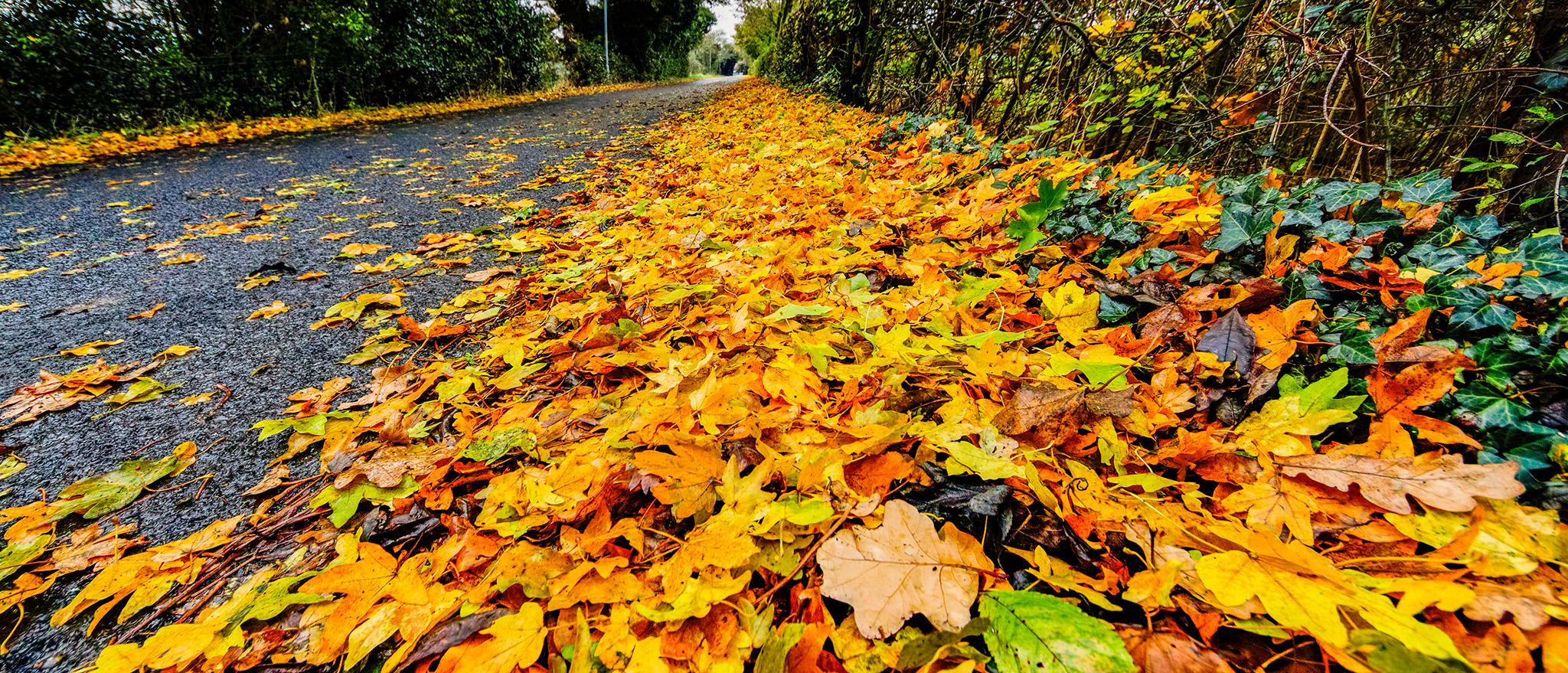 autumn leaves roadside verge