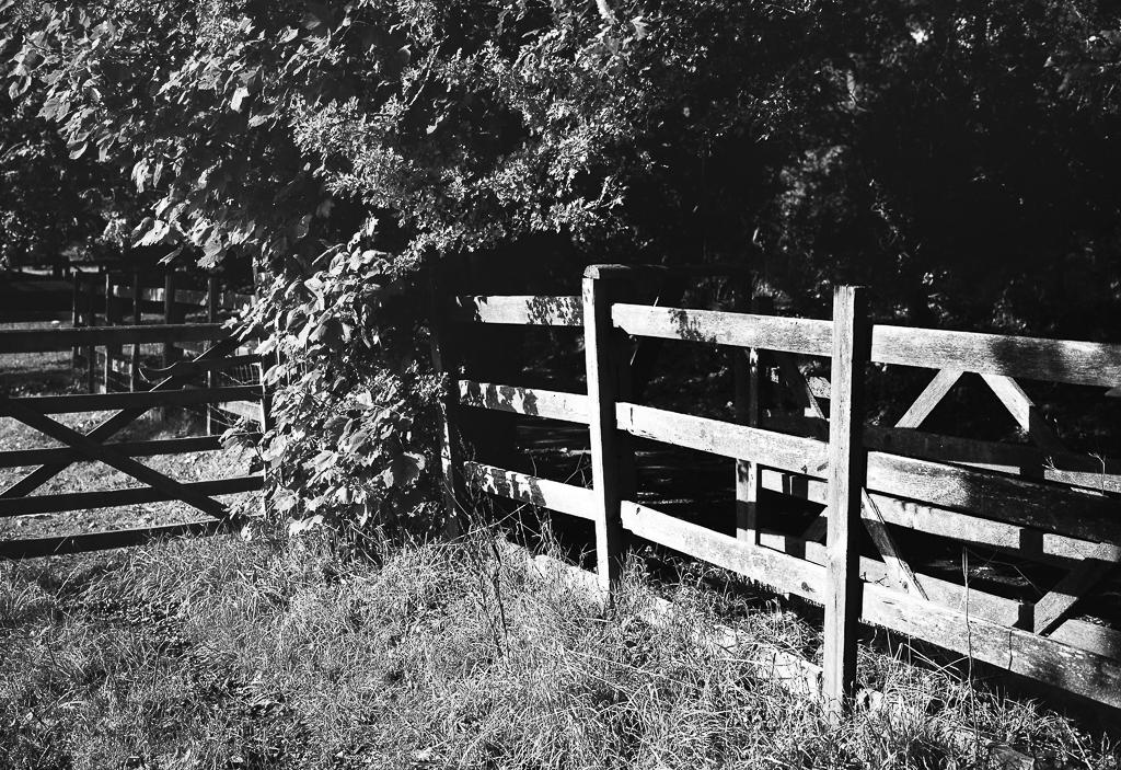 gate-fence-bw.jpg