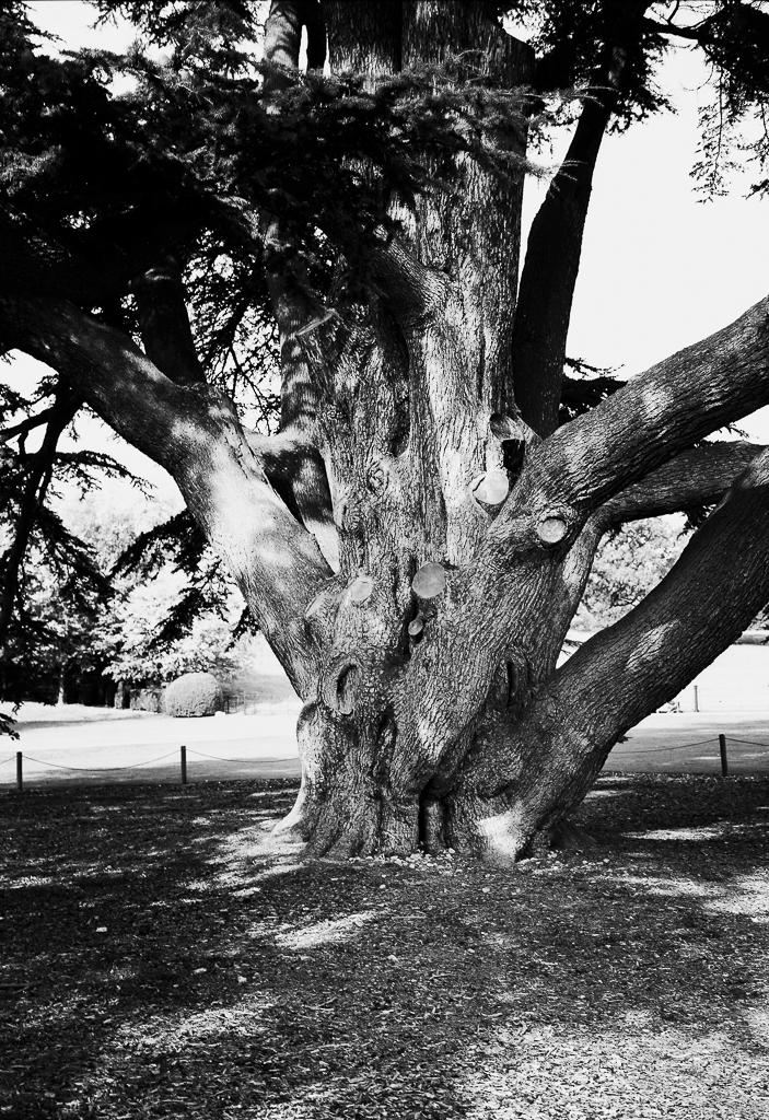 tree-shade-bw.jpg