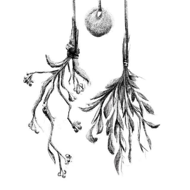 Witches cottage ...#inktober #driedflowers #inktober2019 #doodle #sketch #illustration #october #witchescottage