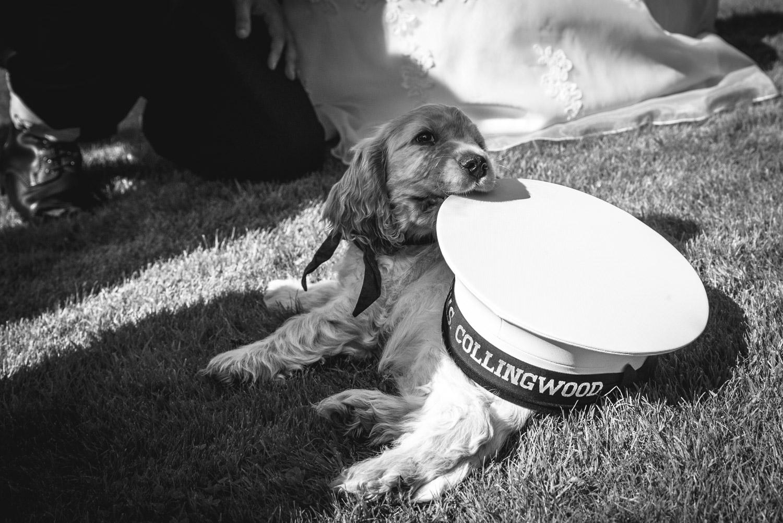 Weddings At Balbirnie House - balfour the dog