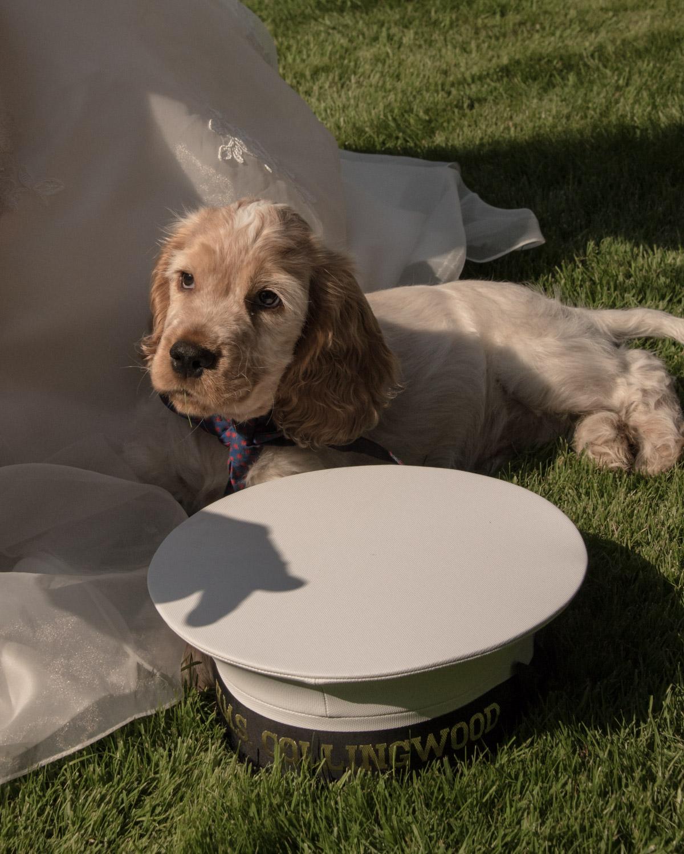 Weddings At Balbirnie House - balbirnie's dog balfour