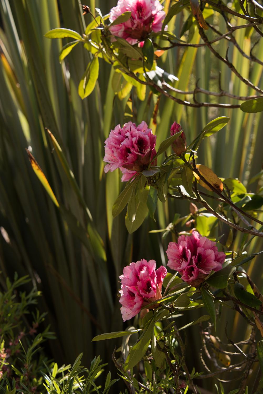Weddings At Balbirnie House - beautiful gardens