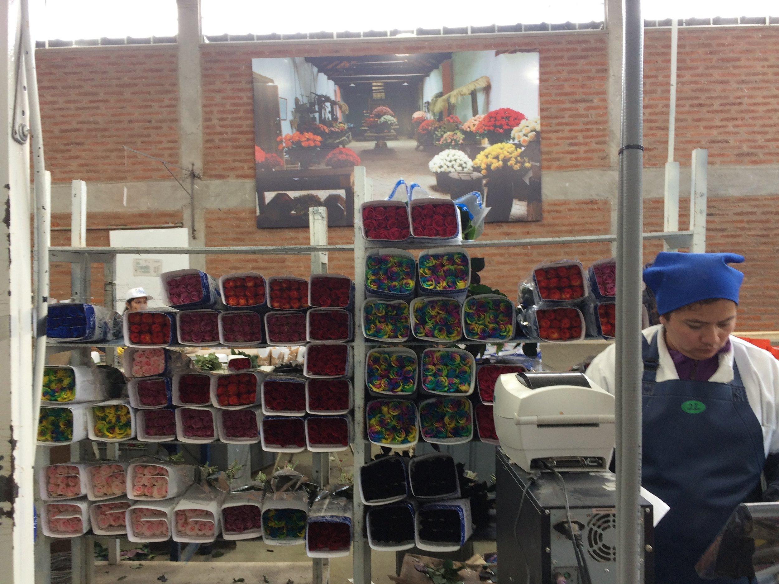 Roses are a bargain in Ecuador.jpg