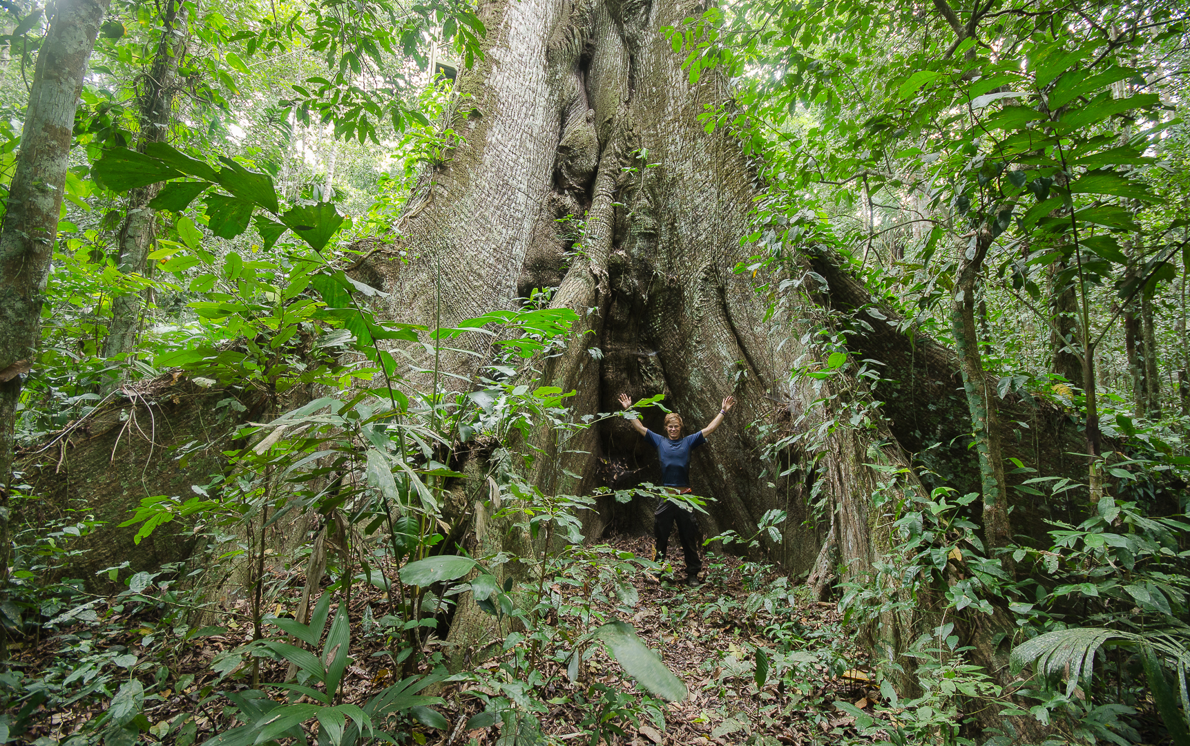 Bertie with a 55m, 500-year-old kapok tree.