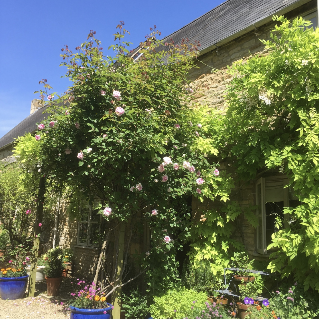 My family home in the Cotswolds. These roses smell incredible!