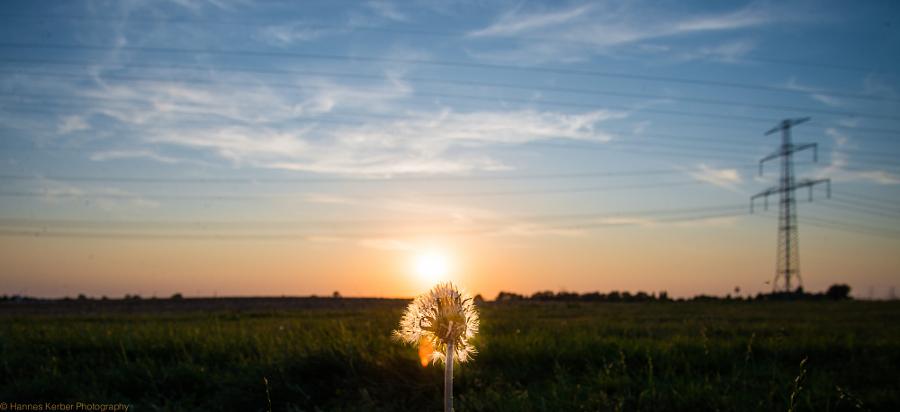 Flower in Sunset...