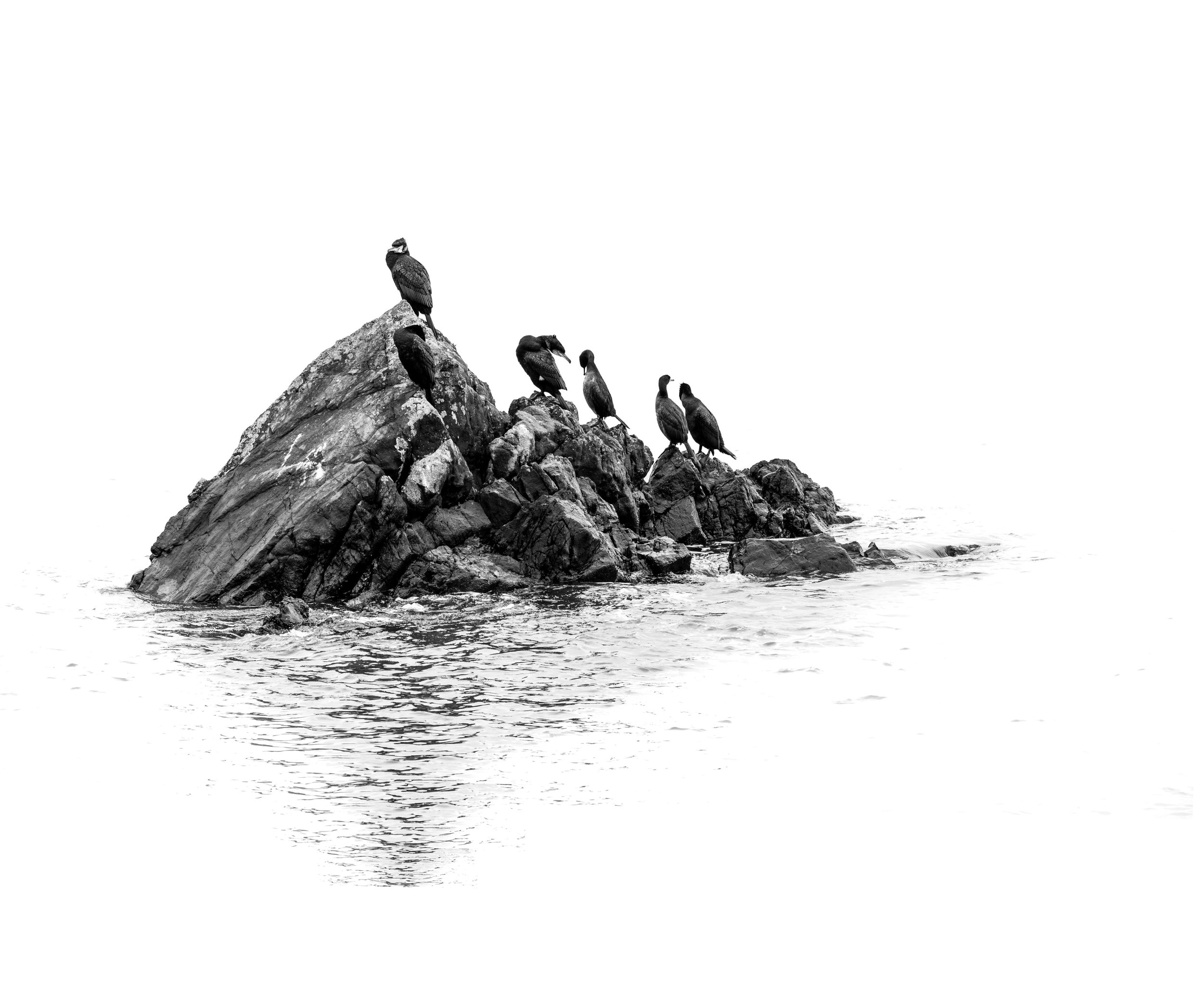 Bird-on-a-rock.jpg