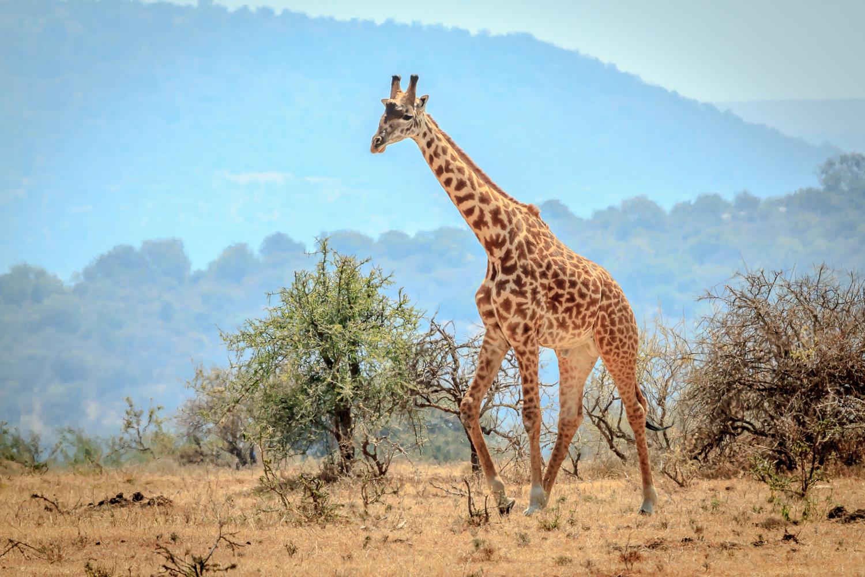 On The Northern Serengeti Plains