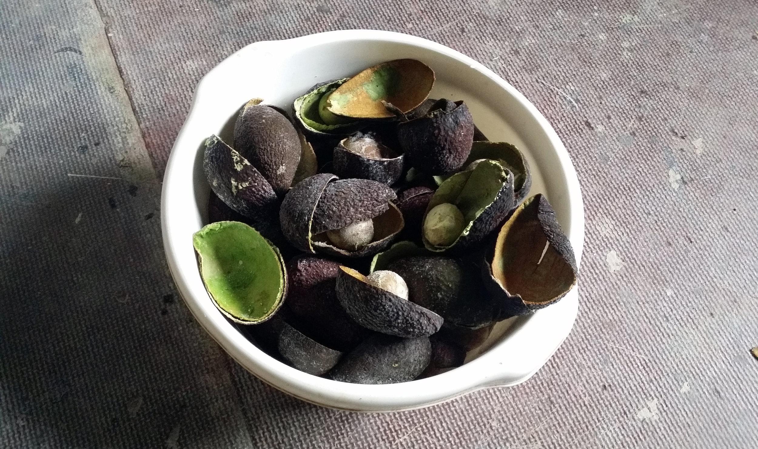 My avocado peel harvest.
