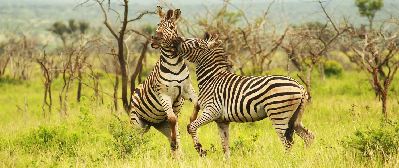Kuva: Thanda Game Reserve