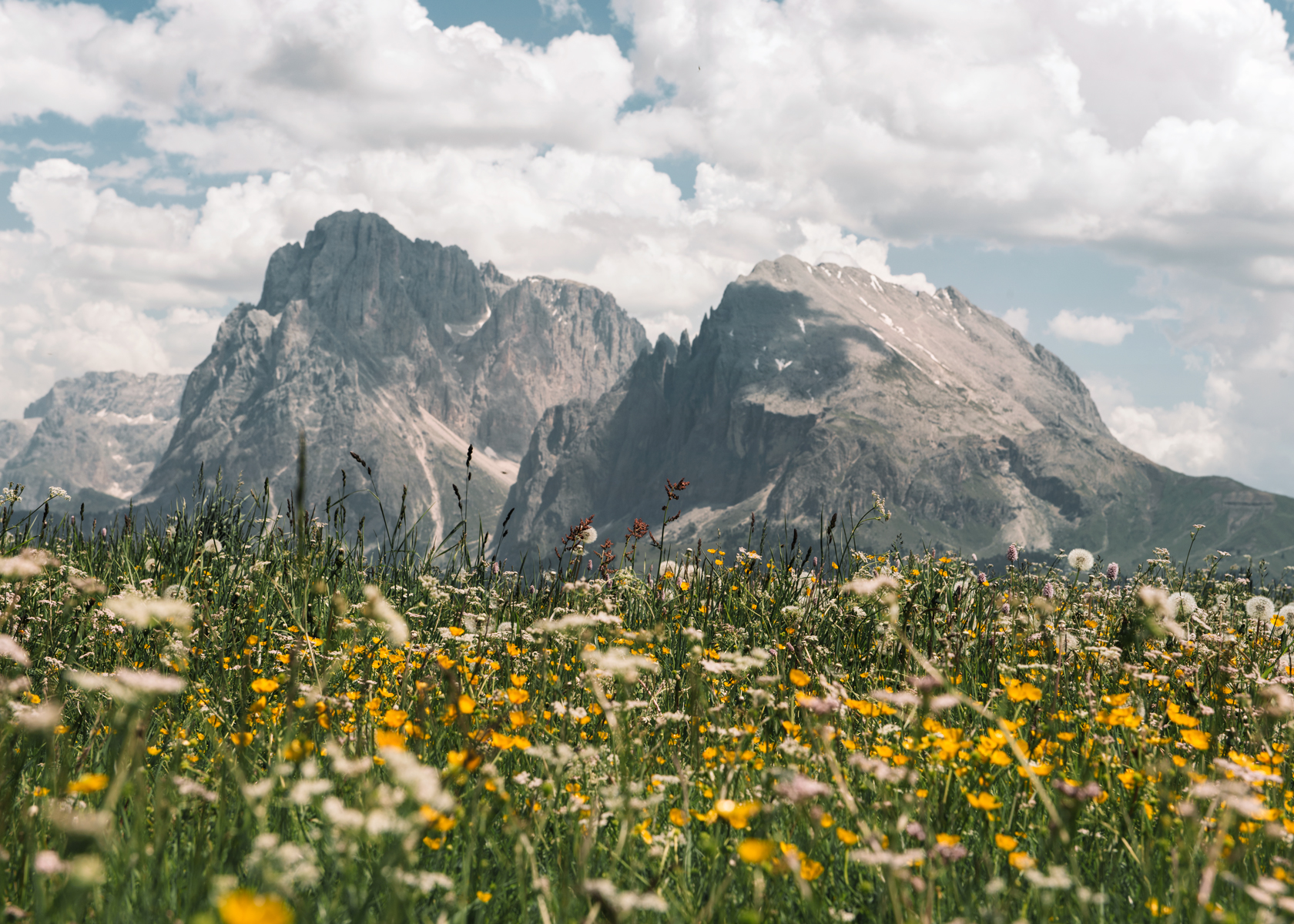 Springtime meadow flowers in the dolomites Italy - Kirsty Owen photography
