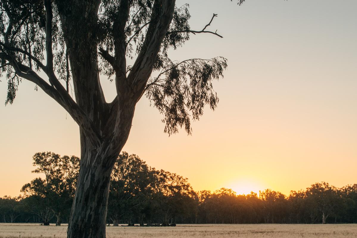 kirsty-owen-photography-murray-river-sunset.jpg