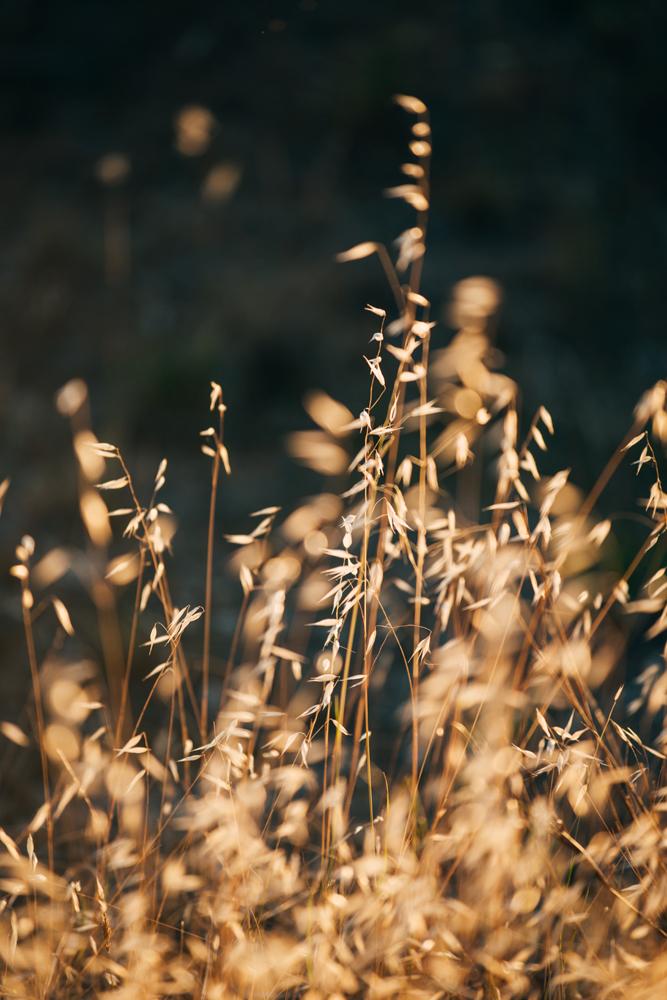 kirsty-owen-photography-travel-murray-river-field.jpg