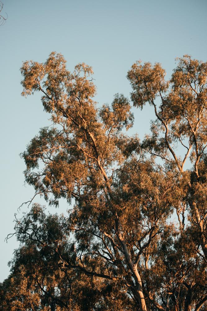 kirsty-owen-travel-photography-murray-river-eucalyptus.jpg