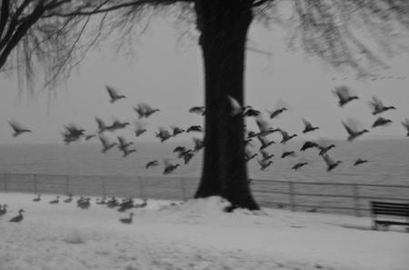 Snow_DC-65.jpg