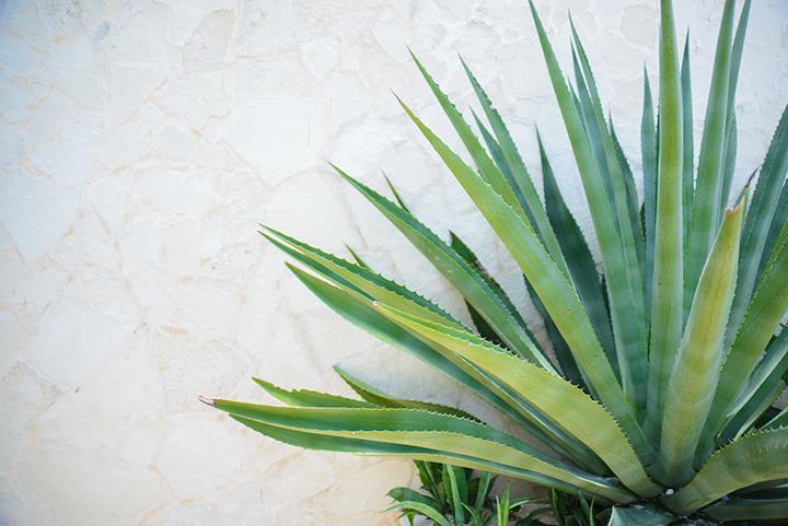 I love the plant life. It amazes me.
