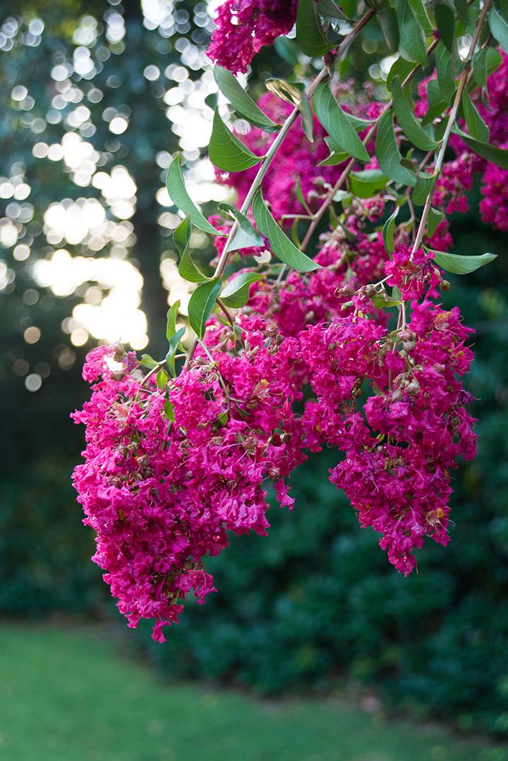 Magical flower season.
