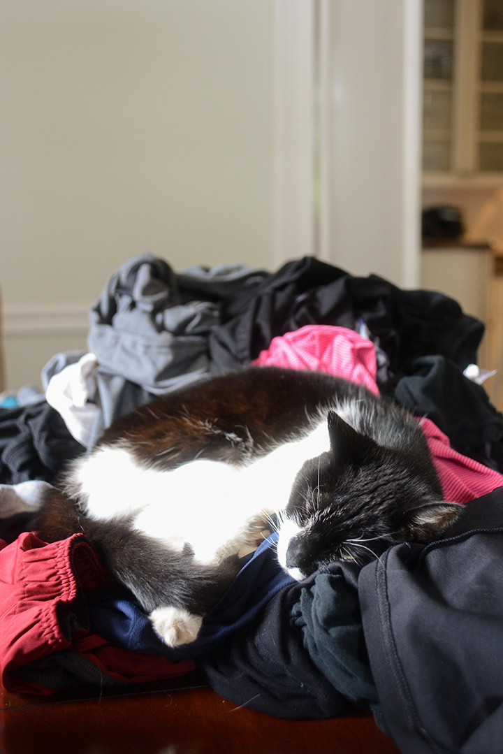 Apparently naps are better on fresh laundry.