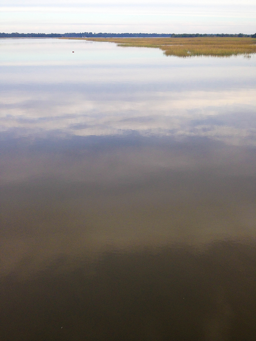 Marsh mornings. That golden marsh grass gets me right in the feels.