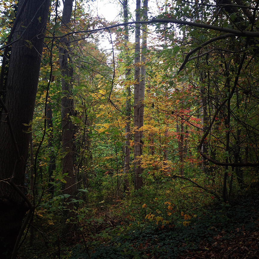 I lose myself in these woods time and time again. The smells and the colors and the light. Just spectacular.