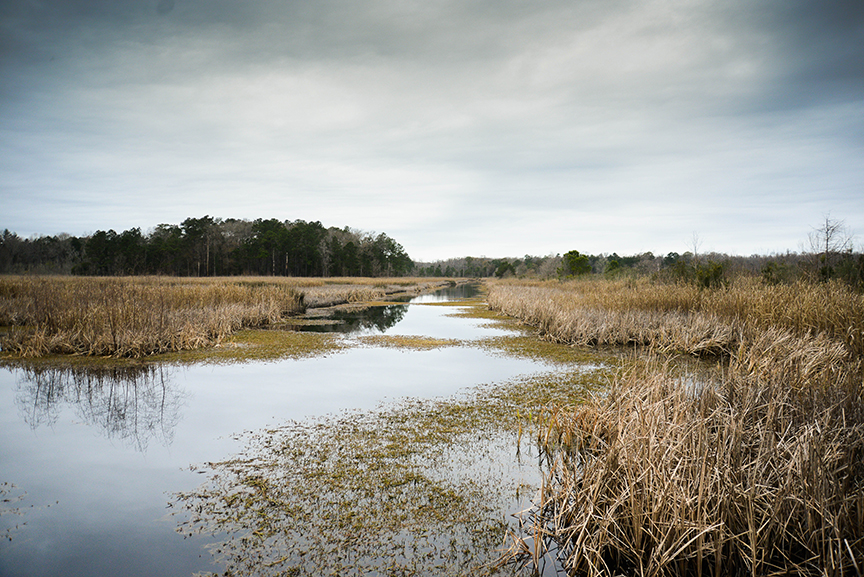 Caw Caw Interpretive Center is just outside of Charleston and WORTH THE TRIP! Go there. Now.