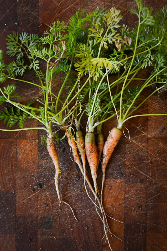 Carrots from my garden. I am learning here too.