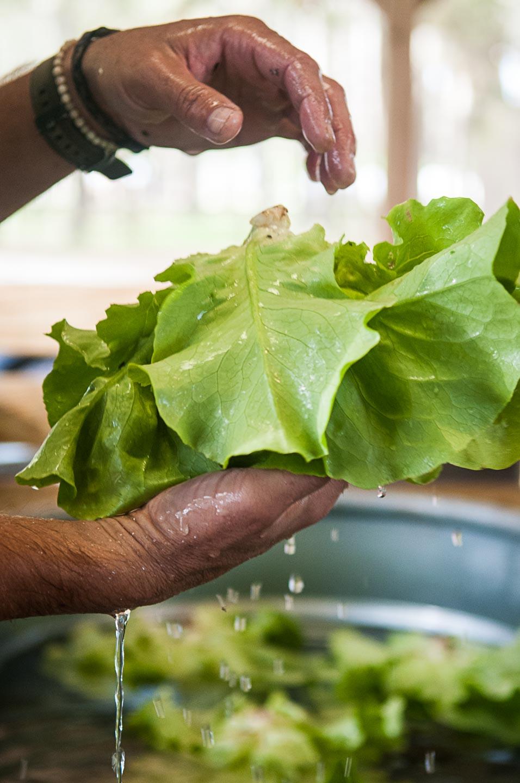 Mr. Lettuce - getting his bath.