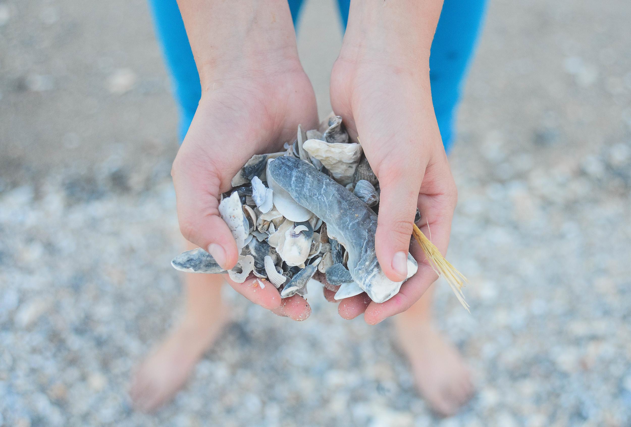 A handful of shells.