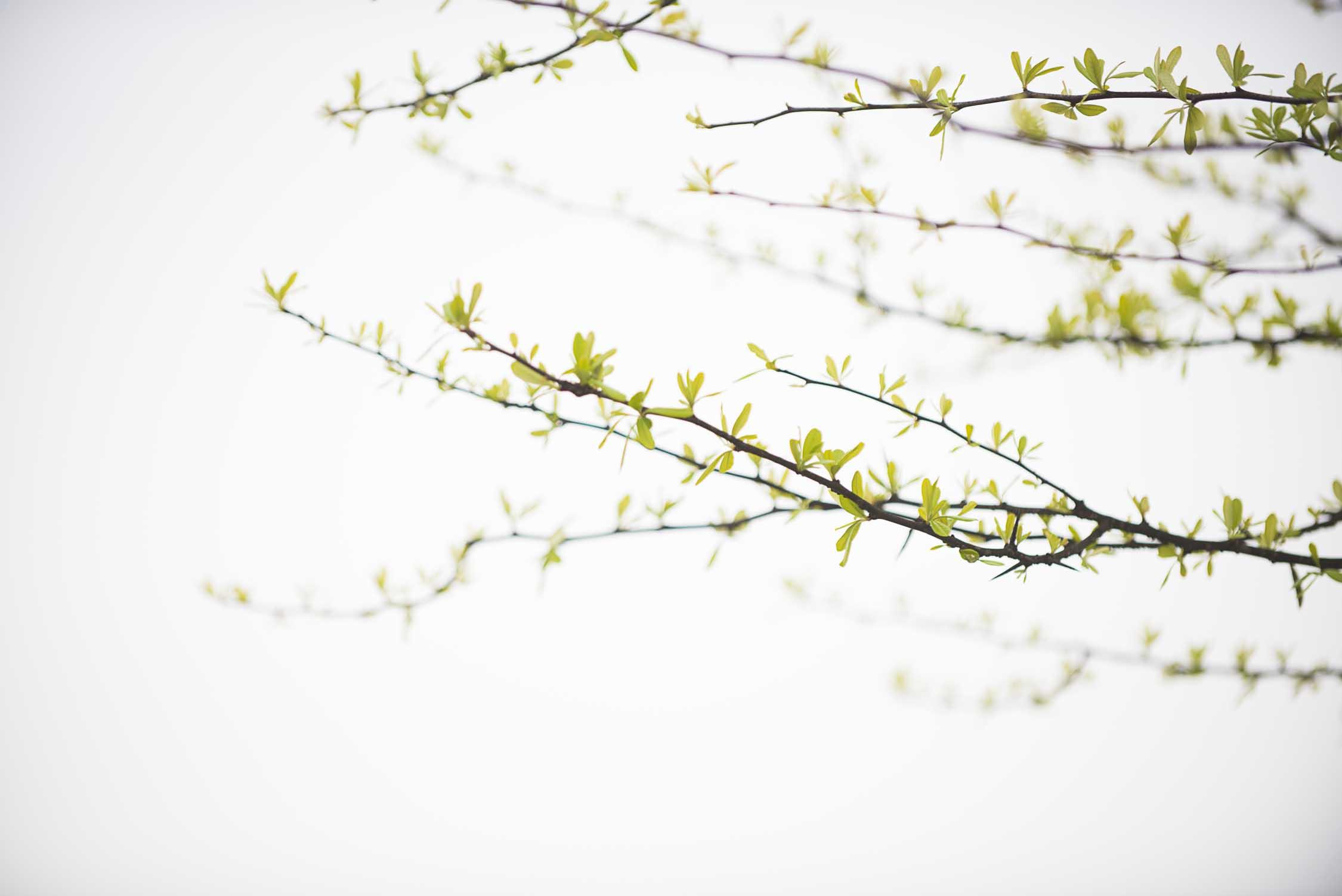 Spring-100.jpg