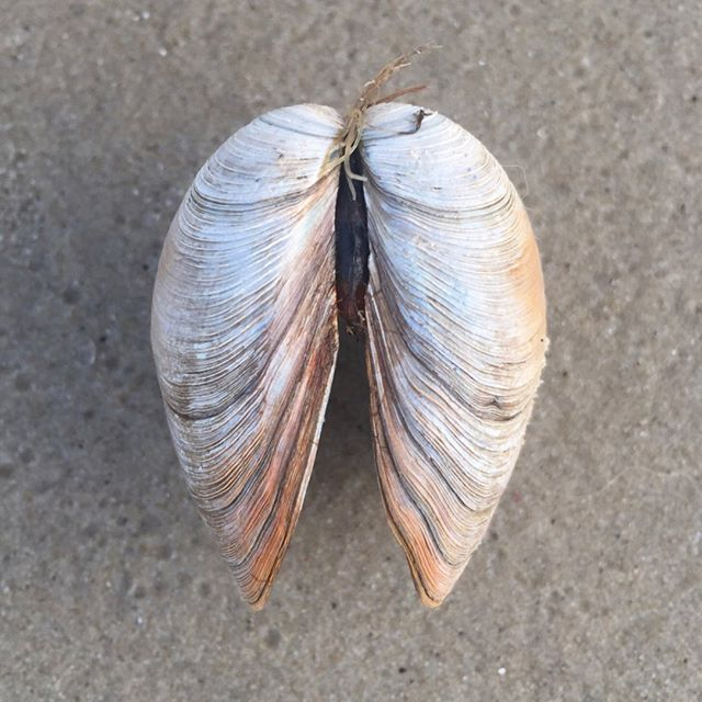 I wrote a blog post today about my dad and seashells. I won't go into it all here, because it was so complicated and simple all together that I couldn't do it justice. Go give it a read if you'd like (link in profile.) if not, I'll leave you with this - be vulnerable enough that you can find beauty in the smallest of things. And be stubbornly, stupidly and unapologetically yourself.