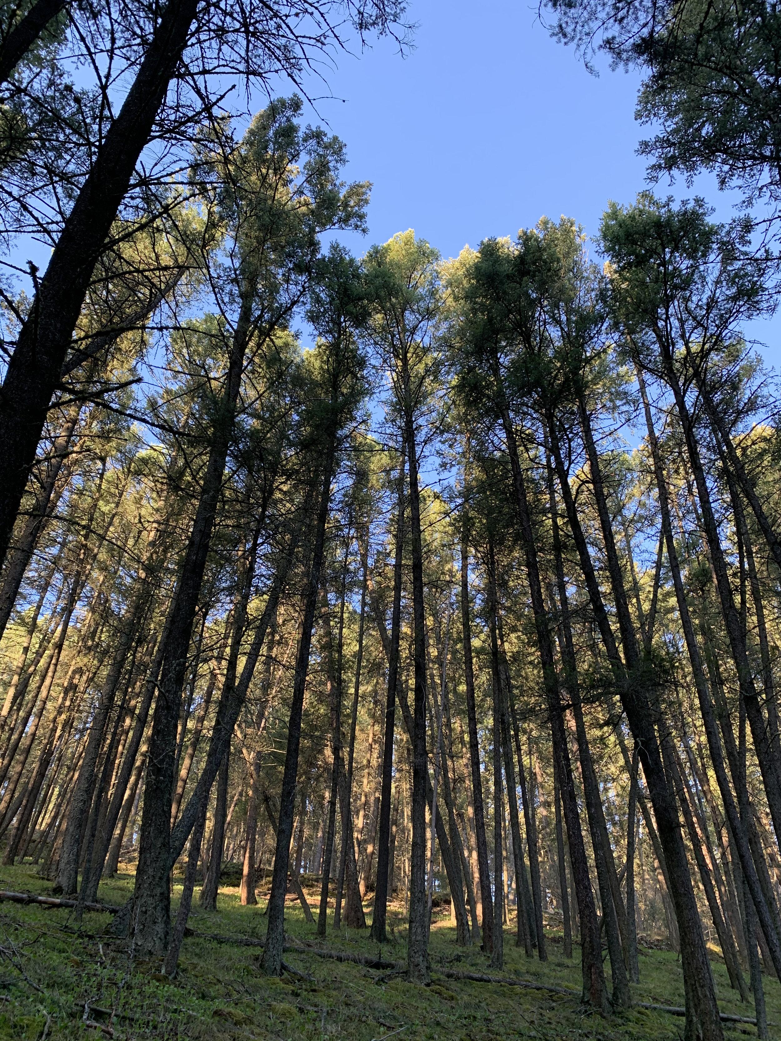Barmeyer Trail: Missoula, MT