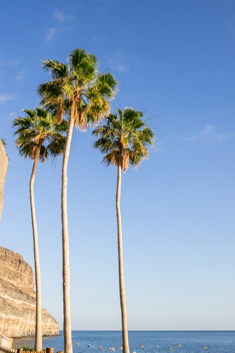 grancanaria-palms.jpg
