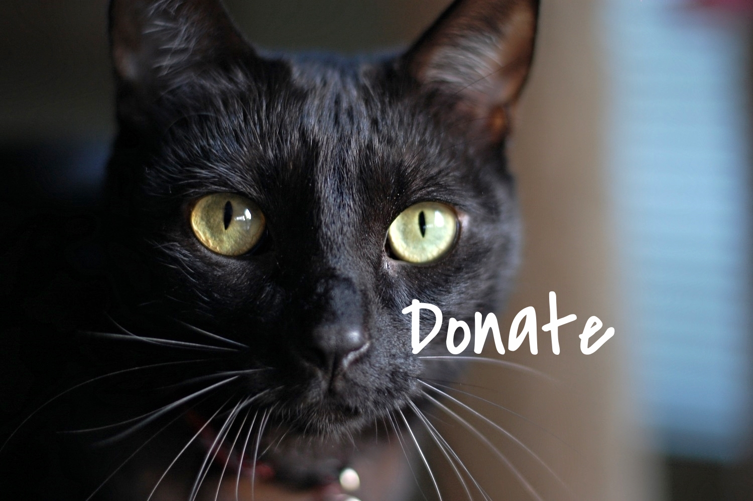 Donate today to support our various programs that make Kern County a better place for cats!