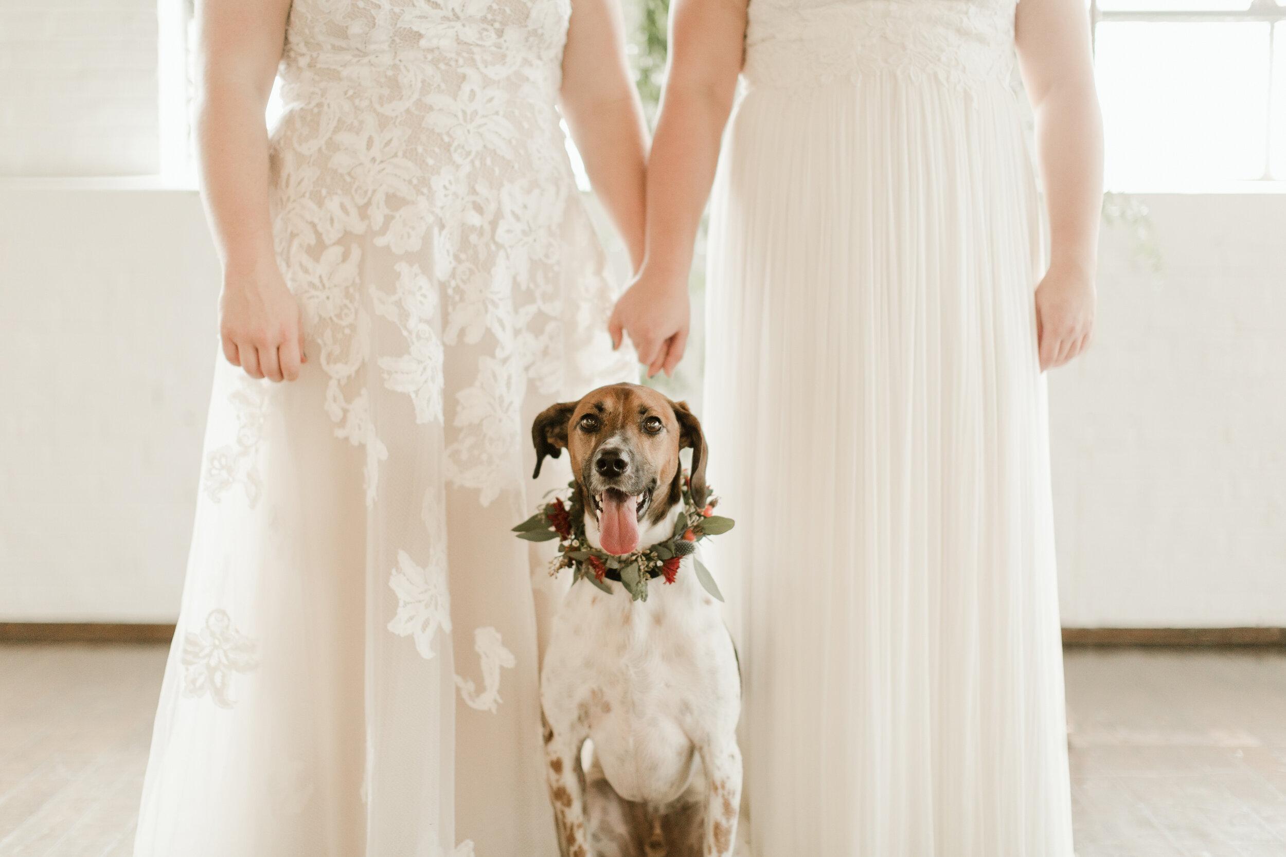 Tip #4: Bring your pet -