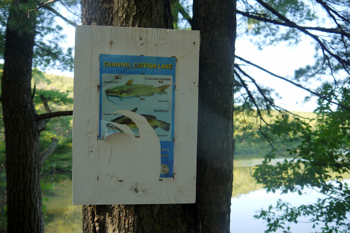 Or at West Lake, this defaced poster explaining lake catfish