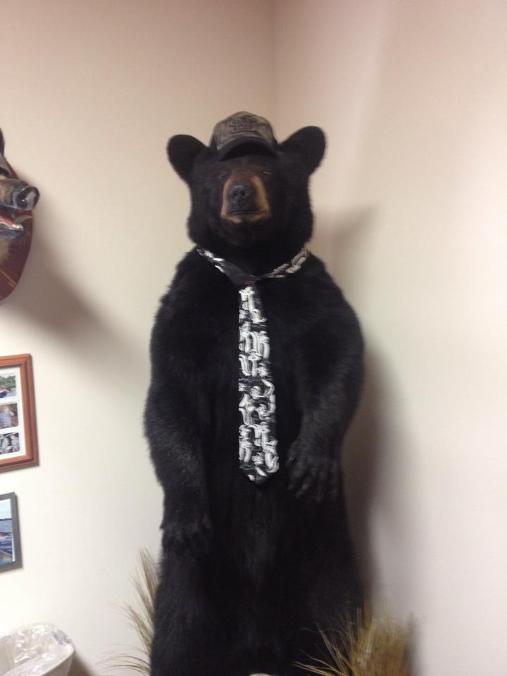 Actual bear in Mark's office