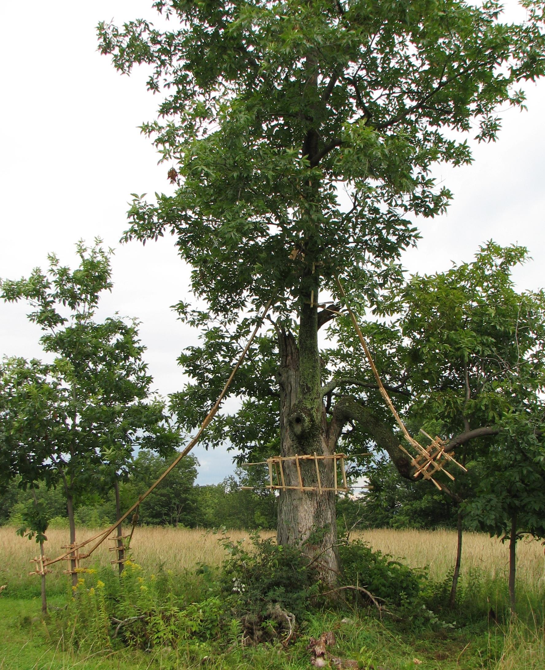The Oath of the Horatii, bitternut hickory tree with hickory and pine framing, Stone Quarry Hill Art Park, Cazenovia, NY