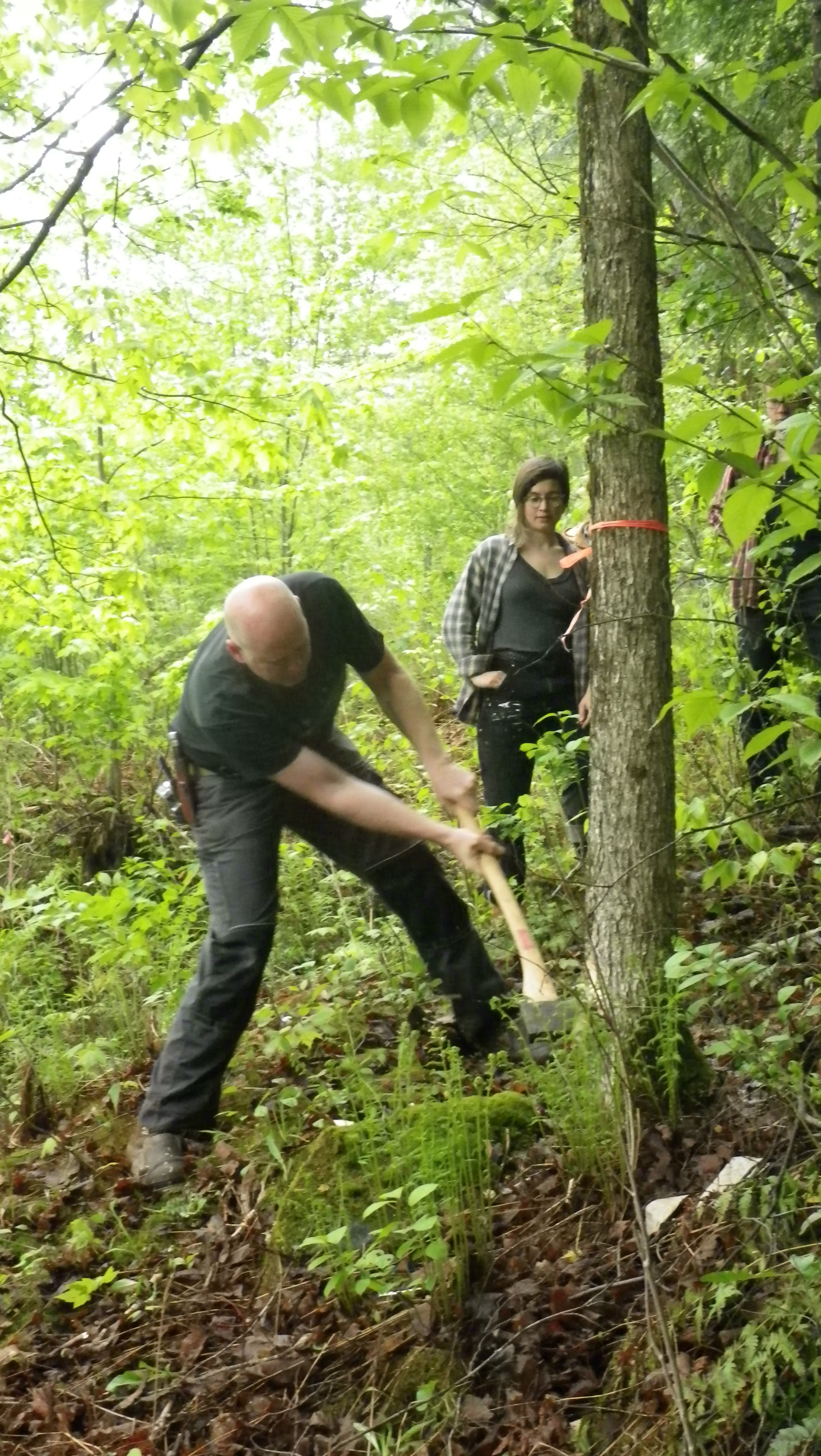 Day one: demonstrating the felling of a small tree to be used for initial projects, Yestermorrow 2013