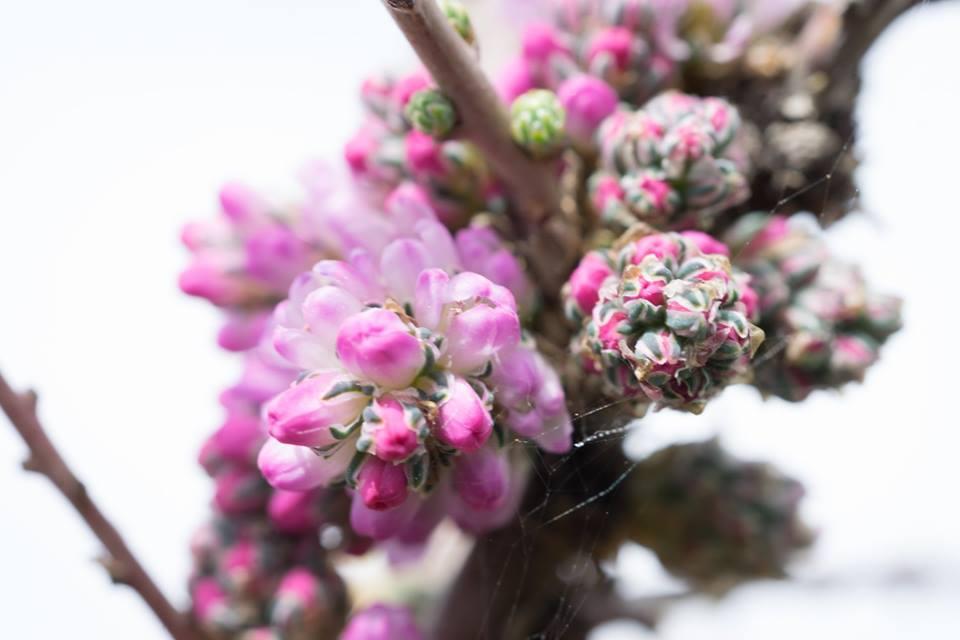 spring flower_8.jpg