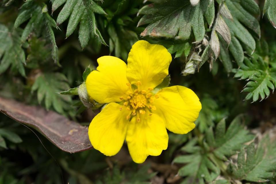 spring flower_11.jpg