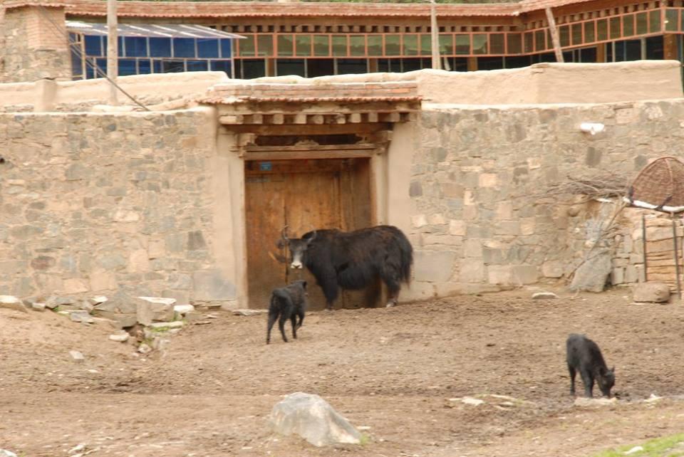 Blog_Kangtsa Monastery._16.jpg